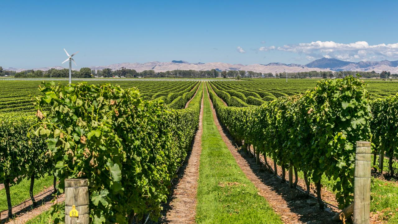 Farm / Ranch / Plantation for Sale at Uncontracted Sauvignon Blanc Marlborough Sounds, New Zealand